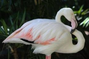 В Австралии усыпили самого старого фламинго в мире