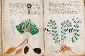 В рукописи Войнича нашли растения Нового Света