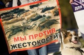 Прокуратура закрыла сайты догхантеров с отчетами об убийствах животных