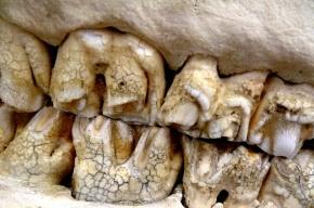 Ученые: древние люди страдали от зубной боли