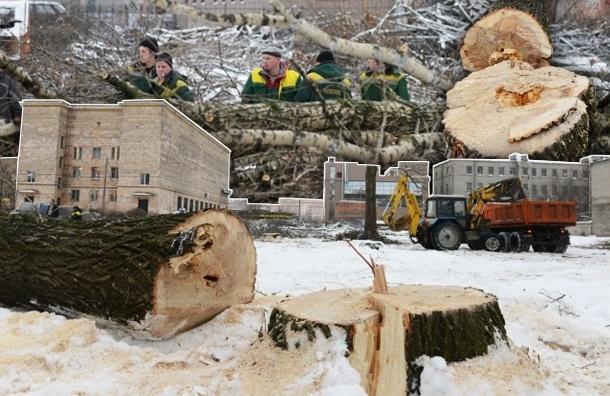 Теперь перед вырубкой деревьев петербуржцев хотя бы проинформируют