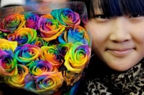 Школьникам из Киргизии запретили праздновать День святого Валентина
