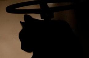 Жительница Нигерии выгнала из дома кота-гея