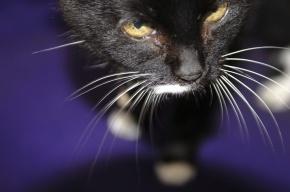 В Бурятии следователи назвали кота виновным в гибели младенца