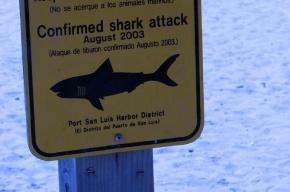 Мужчина погиб в Австралии после нападения акулы