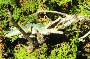 Ученые узнали, зачем крокодилы залезают на деревья