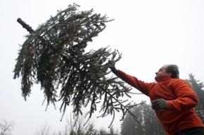 Житель Удмуртии убил подругу из-за неубранной елки