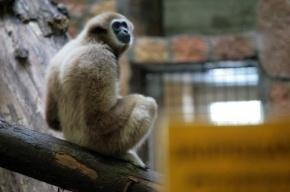 Петербуржцы смогут выбрать проект нового зоопарка