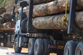 Девять человек погибли в столкновении автобуса и лесовоза в Ленобласти