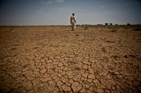 Учёные прогнозируют самый жаркий год в истории