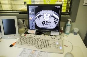 Ученые: Уровень интеллекта зависит от толщины коры головного мозга