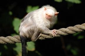 169 новых видов нашли ученые в джунглях бассейна Амазонки
