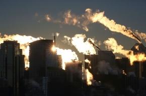 Ученые: Земле грозит шестое массовое вымирание