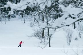 В Екатерингофском парке открылись лыжные трассы