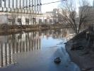 Фоторепортаж: «В Петербурге в реке Смоленке замечена нерпа»