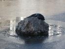 В Петербурге в реке Смоленке замечена нерпа: Фоторепортаж