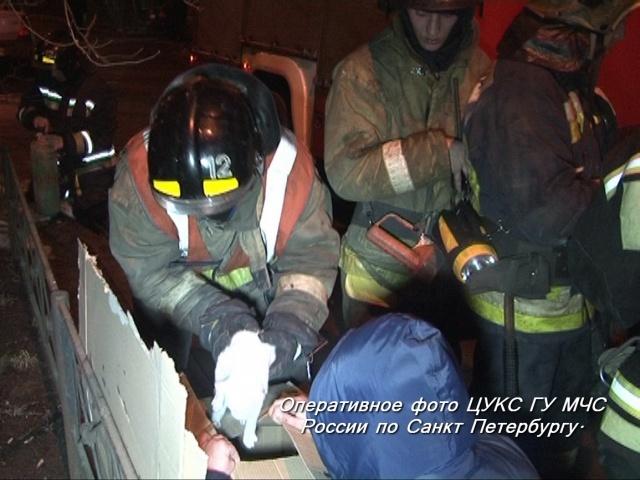 Пожарные спасли 11 кошек из горящей квартиры в Петербурге: Фото
