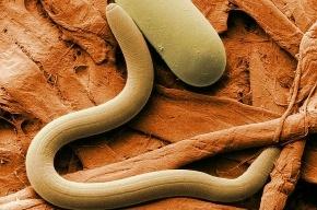 Российские ученые создали искусственный интеллект червя