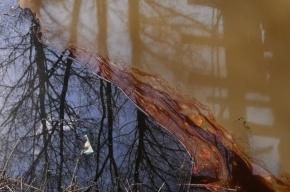 В центре Петербурга произошла утечка нефтепродуктов в Неву