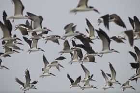 В США самолет совершил аварийную посадку после столкновения со стаей птиц