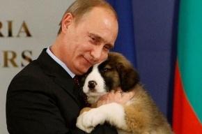 ВЦИОМ: Рейтинг Путина в России находится на максимуме