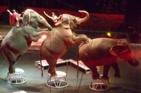 В США трое слонов сбежали из цирка, разбив несколько автомобилей