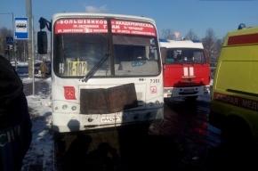 На Пискаревском проспекте столкнулись автобус и маршрутка