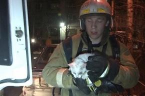 Пожарные спасли 11 кошек из горящей квартиры в Петербурге