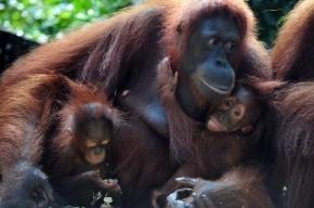 Петербуржцы проголосовали за новый зоопарк в Юкках