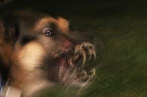 В садоводстве Ленобласти женщину загрызла стая собак