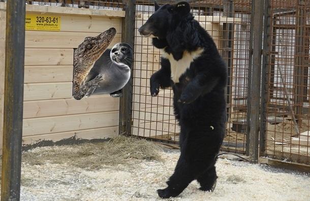 Гималайские медведи, крокодил и тюлень живут вместе под Петербургом