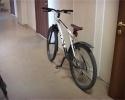 Петербуржец украл десять велосипедов за два месяца: Фоторепортаж