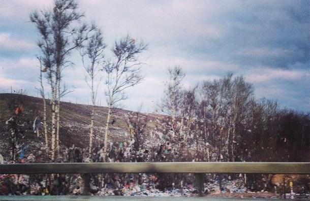 свалка в Выборгском районе