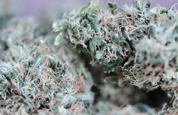 Лекарства на основе марихуаны не разрешат к продаже в России