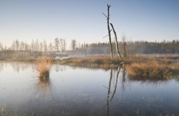 Что угрожает болотам города?