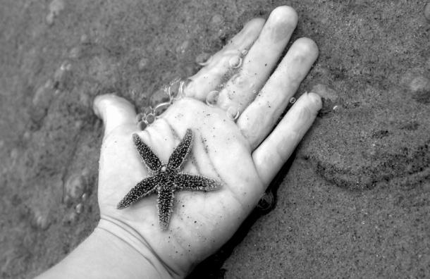 Морские звезды положительно влияют на организм человека