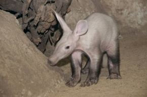 Зоологи выступили против строительства зоопарка в Юкках