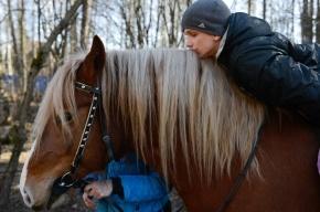 Иппотерапия: Весеннее обострение? Садись на лошадь