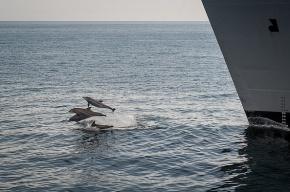 США отправят боевых дельфинов на учения НАТО в Черном море