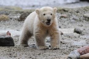 В Петербурге 33 тысячи горожан приняли участие в опросе о расположении нового зоопарка