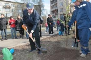 Полтавченко посадил яблоню и березу