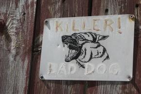В Приморье сторожевые собаки насмерть загрызли мужчину