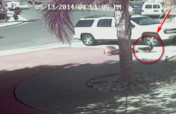 Кот спас мальчика от нападения собаки