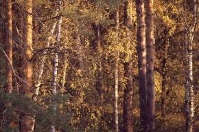 Мужчина 10 дней блуждал в лесах Новгородчины, питаясь березовыми грибами