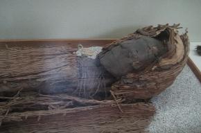 Чилийские школьники нашли мумию возрастом 7 тысяч лет