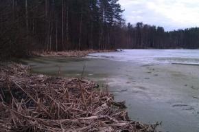 Озеро под Зеленогорском превратилось в болото из-за сброса сточных вод