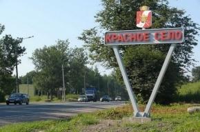 Жители Красного Села собирают подписи за решение транспортных проблем