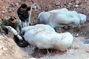 В Аргентине нашли кости самого гигантского динозавра в истории Земли