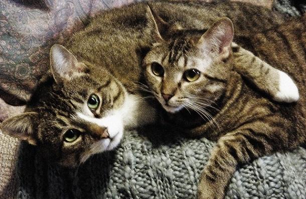 В петербургской квартире нашли тело пенсионерки и 10 кошек