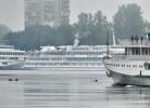 В Петербурге лоси открыли купальный сезон : Фоторепортаж